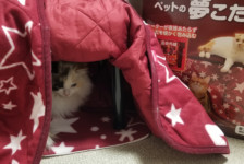 Far-Infrared Pet Dream Kotatsu with Futon & Mat