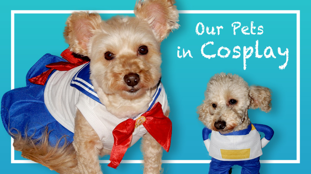 Our Pets in Cosplay