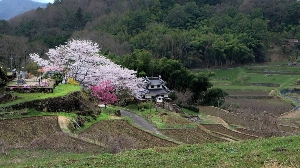 $500 Homes In Japan Are A Thing