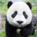Profile picture of sunny phu