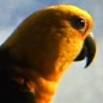 Profile picture of Java