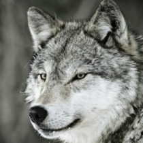Profile picture of El Wolf Mario